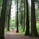 Arboretum La Jonchère Saint Maurice